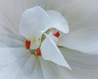 Floral Macro, 2016, Pt. 1