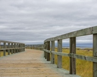 Bouctouche_Dunes14_lcd