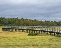 Bouctouche_Dunes8_lcd