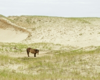 Nostalgia 1: Sable Island Revisited, 2010